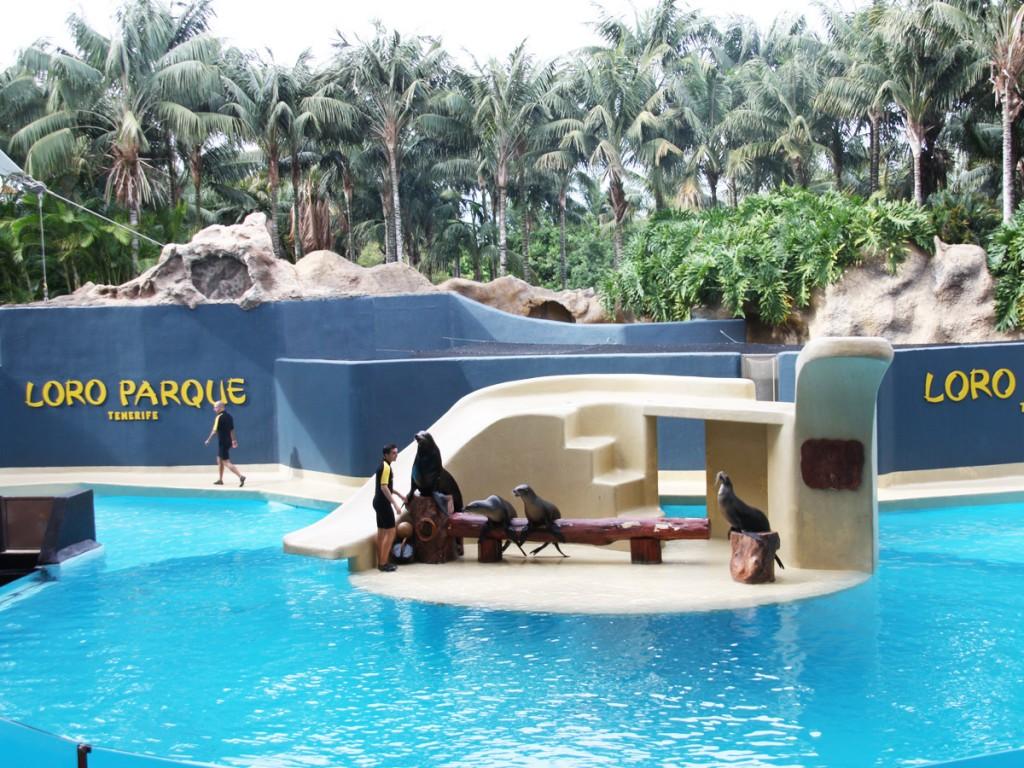 Der weltweit berühmte Loro Parque ist bei kleinen und großen Gästen Teneriffas sehr beliebt