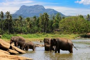 Sri Lanka - Pinnawela