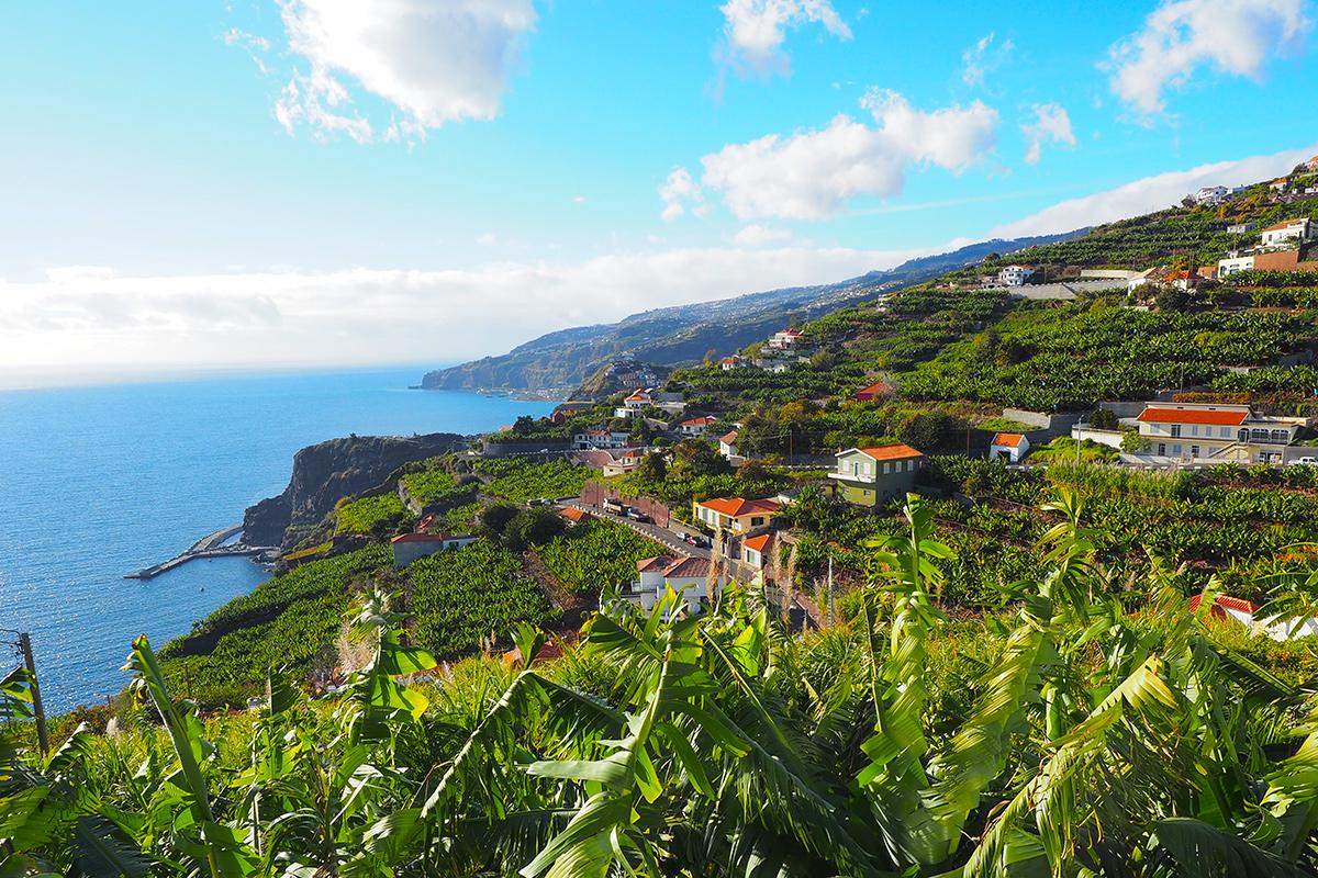 Madeira - Calheta Bananenplantagen