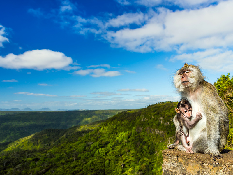 Mauritius-Black-River-Nationalpark