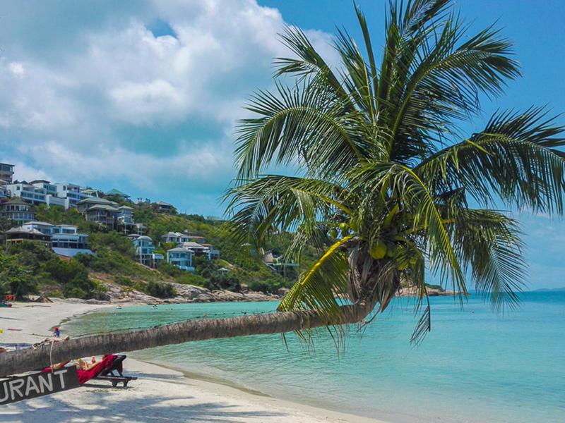 Koh Samui - Thongson Bay, Palme