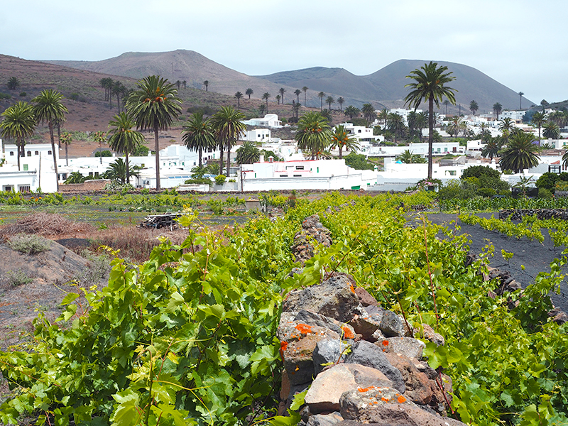 Lanzarote - Haria, Tal der tausend Palmen